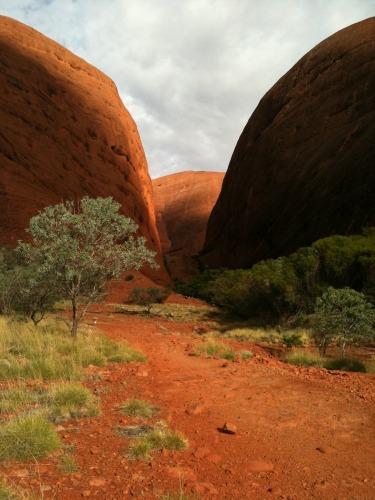 Uluru_-_kata_tjuta_105
