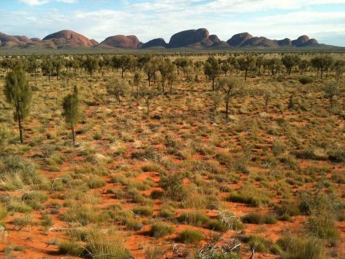 Uluru_-_kata_tjuta_127